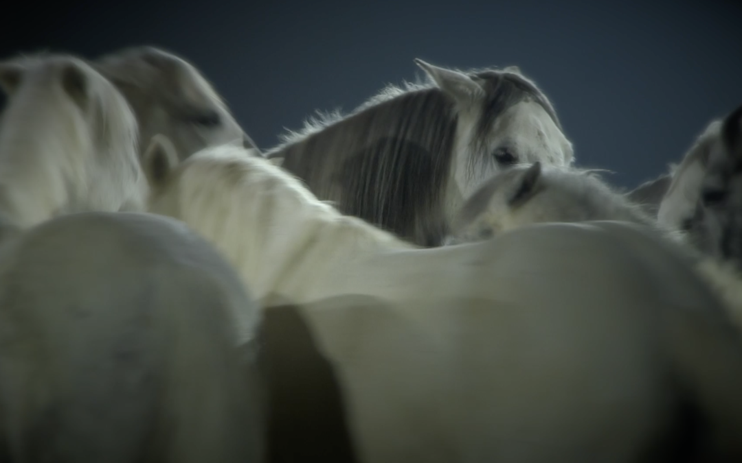 Cheval Passion 2019 – Teaser